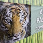 Renew the Zoo: Zoo Reaches 85 Percent of Its $18 Million Goal for Construction