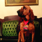 Going to the Dogs: Internet Sensation Will Be Honorary Runner at Steeple2Steeple