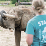 Heavy Lifting: Zoo Offers Guests a Chance to Pump up Next to Pachyderms
