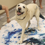 Lending A Paw: Artists Create Original Pieces with Pets to Support Hand in Paw