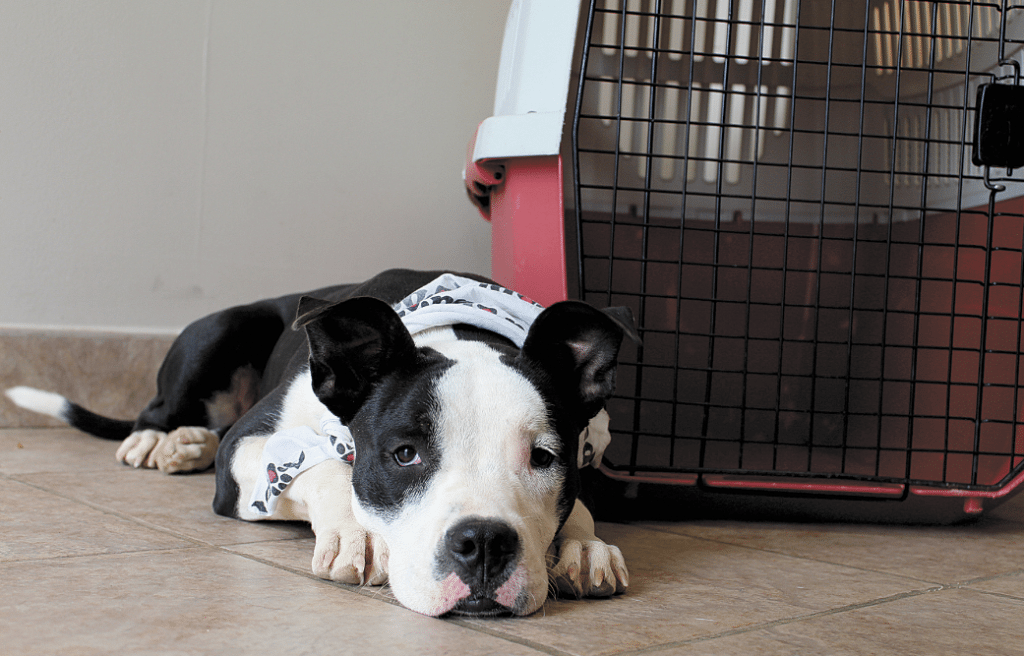 The Greater Birmingham Humane Society again this year is offering a range of gifts animal lovers can donate on someone else's behalf. Photos special to the Journal.