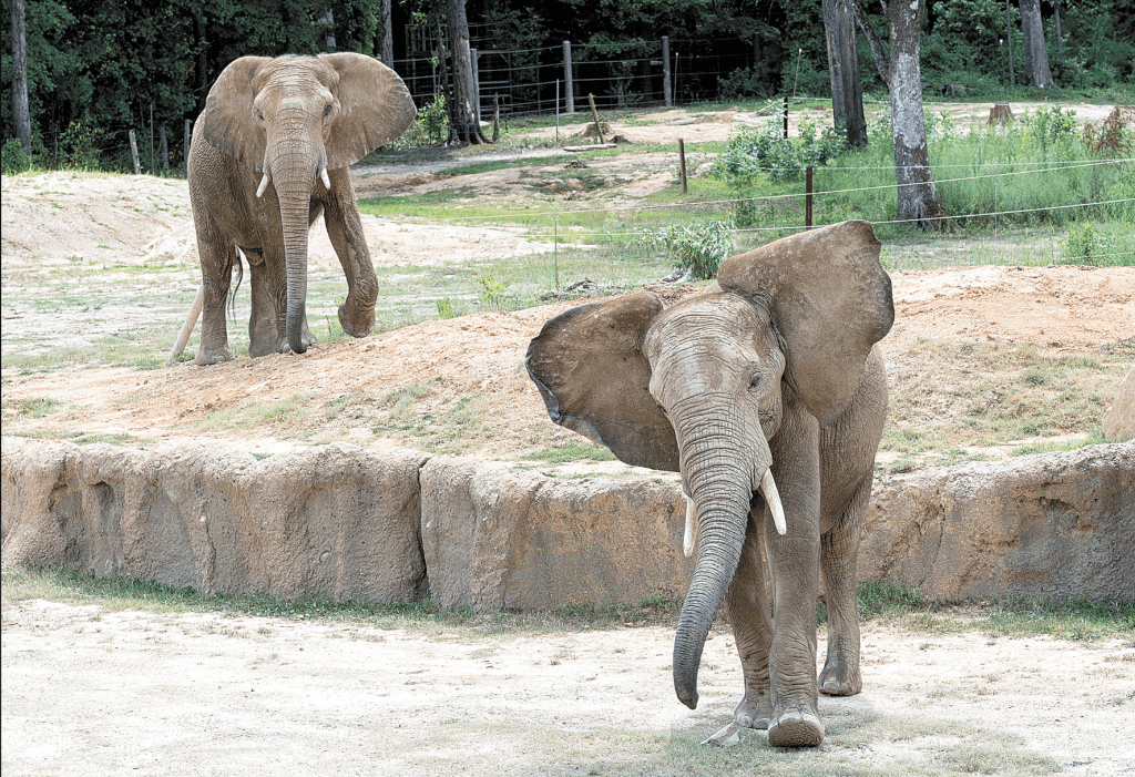 Ajani, left, is the loner of the group, but steady to participate. Callee, right, is the smallest of the bunch but gets points for enthusiasm and personality. Journal photos by Lee Walls Jr.